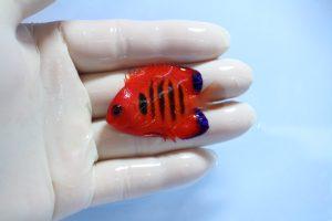 マーシャル・ケニア 海水魚