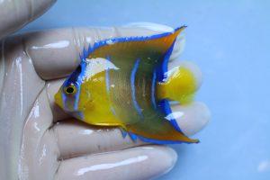 ブラジル・スリランカ 海水魚