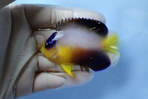 マーシャル・カリブ 海水魚