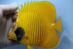 紅海・カリブ 海水魚