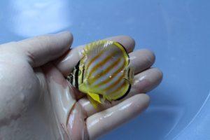 セブ・マニラ 海水魚