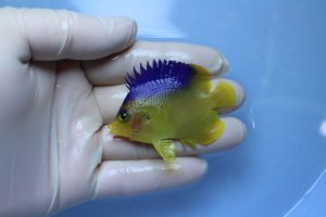 バリ・スリランカ 海水魚