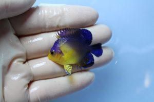 バリ・石垣 海水魚